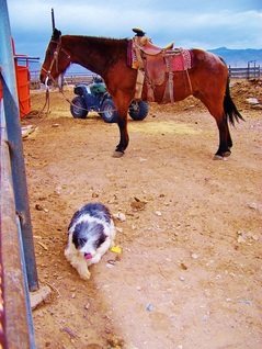 Pony and dog at corral.