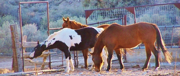 Horses and corral at KW Legacy Ranch.